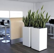 modern office plants. Modern Indoor Plants Contact Us For An Plant Office D