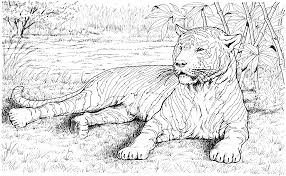 Small Picture Free Tiger Coloring Pages Coloring Home