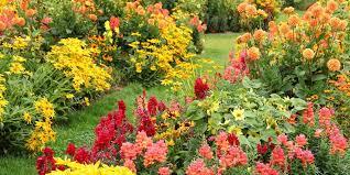 best garden plants. Getty Images Best Garden Plants