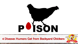 1249 Best Backyard Chickens Images On Pinterest  Backyard Backyard Chicken Blog