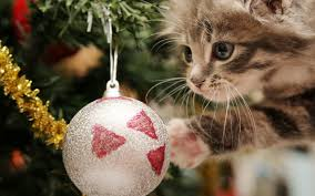 Christmas Kitten Wallpapers - Wallpaper Cave