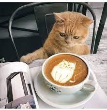 Кофе и котики — @дневники: асоциальная сеть