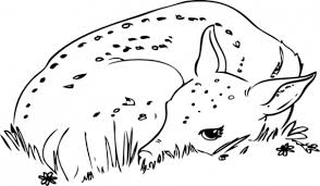 Small Picture Baby Deer Coloring Pages GetColoringPagescom