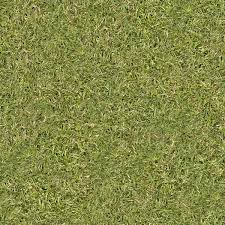 download grass texture tall grass seamless texture70 tall