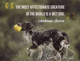Beautiful Animal Quotes Best Of Animal Quotes The Most Affectionate Creature In The World Is A Wet