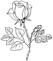 rose to color coloring pages of roses 3 coloring pages of roses 5 coloring pages
