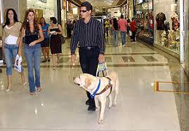 Cão guia conduz pessoa cega em um shopping center