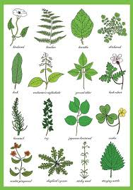 Weeds Greetings Card Weed Identification Chart Horticulture Study Of Plants Weeds Science Gardeners Gardening Art Print Card