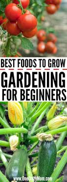 home gardening for beginners what to grow in a garden for beginners gardening for