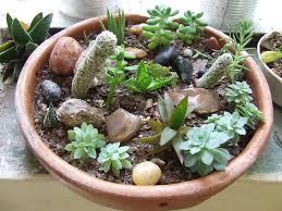 Indoor Rock Garden Succulent Rock Garden Home Design Ideas
