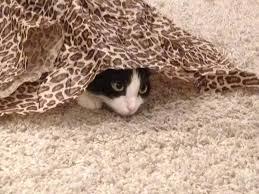 cat puzzle rug and the cats cat puzzle rug uk cat puzzle rug