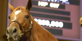 selecting a thoroughbred the role of genetics