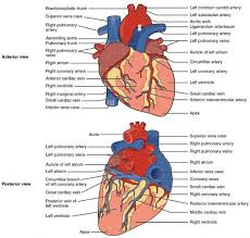 Lorde has said she especially likes the song. 16 The Heart Medicine Libretexts