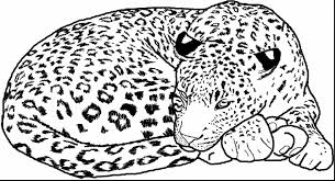 Great Cheetah Coloring Page