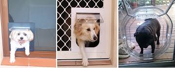 glass dog doors samanthas pet doors