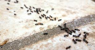 garden ants. How To Have An Organic Garden Non Toxic Pest Control Get Rid Of Ants