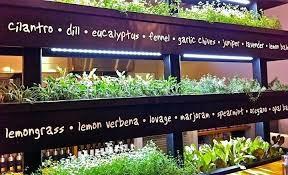 indoor herb wall indoor wall herb garden kitchens vertical garden herb wall indoor wall herb
