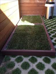 dogs bathroom grass. 2 large dog grass pad boxes pushed together to create a very patch of real dogs bathroom n