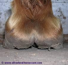 Horse Hoof Anatomy Revealed Via Dissection Photos