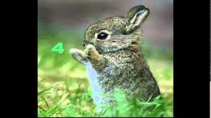 Top five cool facts: Rabbits~ - YouTube