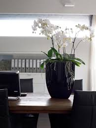 office plant displays. Beautiful Orchids For Your Office Spaces By Eco Plants Plant Displays R