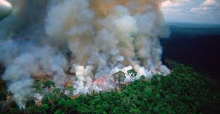 Carbon emissions from Amazon wildfires could 'counteract' deforestation  decline - Carbon Brief