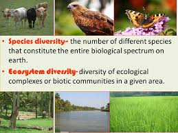 Species Diversity Definition Totality Of Genes Species And Ecosystems Of A Region Genetic