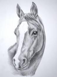 Disegni A Matita Semplici Proposta Muso Cavallo Striscia Bianca