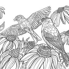 coloring book america s favorite birds 40 beautiful birds to color
