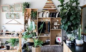 for the love of plants why you need houseplants which ones to start with