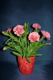 Dianthus caryophyllus Kerti szegf My clay flower https www.