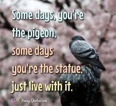 Statue Quotes Extraordinary Some Days You're The Pigeon Some Days You're The Statue Just Live