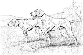 pointer animal coloring pages