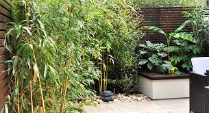tropical garden ideas in london
