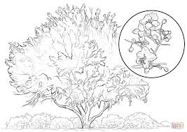 Yellow Palo Verde coloring page | Free Printable Coloring Pages