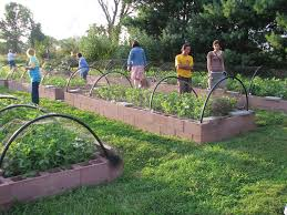 these raised beds are covered with low tunnels constructed with plastic hoops netting stretched over the hoops protects the vegetables from deer and birds