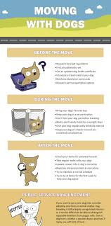 How To Move With A Pet In Thailand