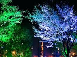 outdoor tree lighting ideas. Outdoor Landscape Lighting For Trees Magnificent Tree Ideas And