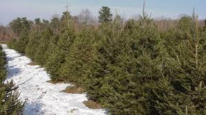 Cedar Grove Christmas TreesChristmas Tree Cutting Nj