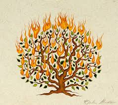 Image result for burning bush picture