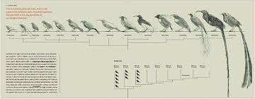 Bird Size Chart Bird Size Comparison Chart Google Search Chart