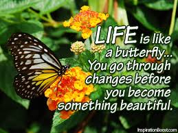 Beautiful Butterfly Quotes Best of Life Is Like A Butterfly Inspiration Boost