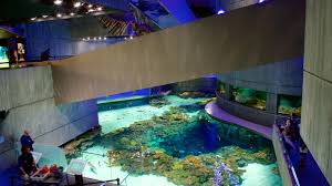 national baltimore aquarium hours best accent chairs and