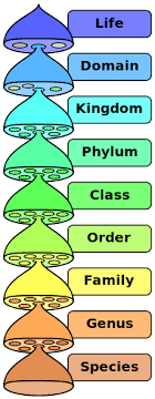 Animal Classification Chart Invertebrates Animal Classification And Chart Science Trends