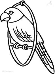 Kleurplaat Dieren Vogels Kleurplaat Papegaai