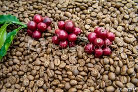 The biggest coffee beans enemies are moisture, air, light, and heat. Fresh Coffee Cherry Red Coffee Beans On Roasted Coffee Bean Texture Background Ripe And Unripe Berries Stock Photo Adobe Stock