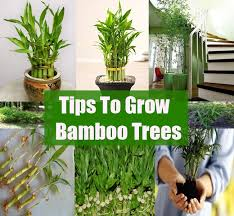 Small Picture Garden Design Garden Design with How to Grow Bamboo Plants
