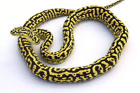 zebra jungle morph carpet python r89 carpet