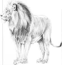 easy lion drawings in pencil. Brilliant Drawings Drawing Male Lion Running Throughout Easy Drawings In Pencil