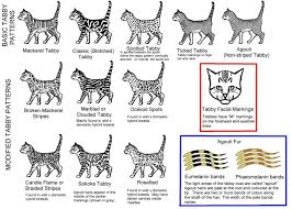 Tabby Patterns Amazing Cat Coat Patterns World Of Cat